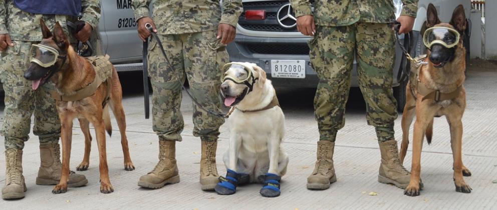 Frida_Eco_y_Evil_los_perros_rescatista_de_desastres_naturales