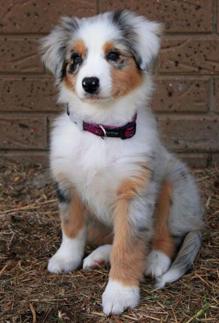 Cute-Dogs-1-8
