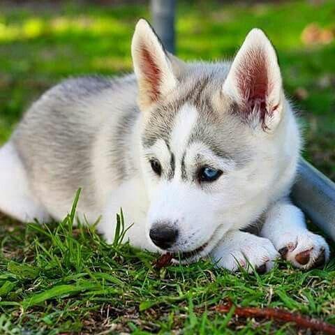 Cute-Dogs-12-3