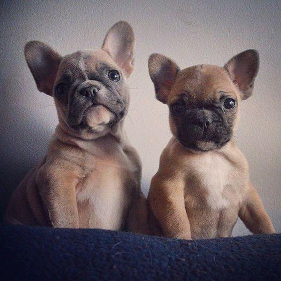 Cute-Dogs-15-2