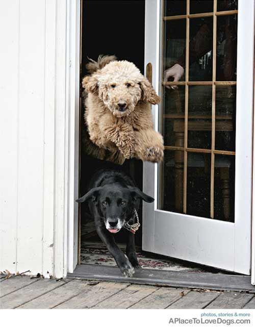 Cute-Dogs-3-8