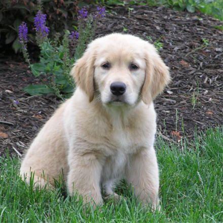 Cute-Dogs-5-8