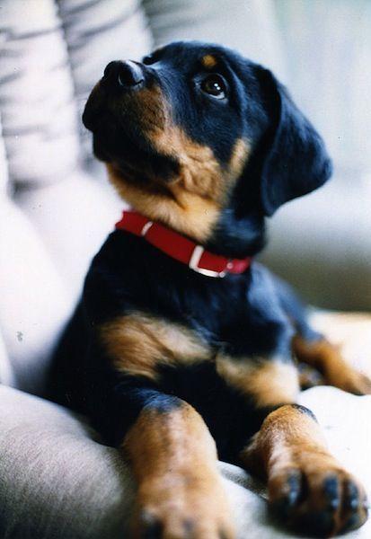 Cute-Dogs-7-8